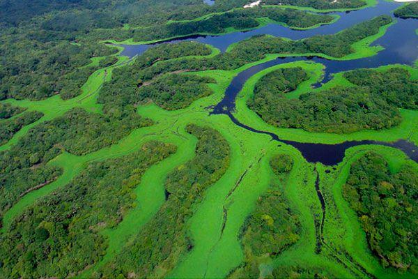 amazonas parque das anavilhanas