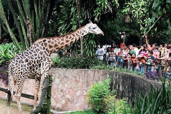 Zoologico de São Paulo